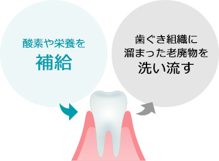 歯ぐきマッサージで血行促進。歯ぐき細胞を元気に!